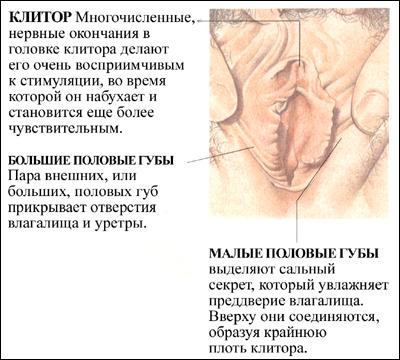 Женской половой орган во время секса